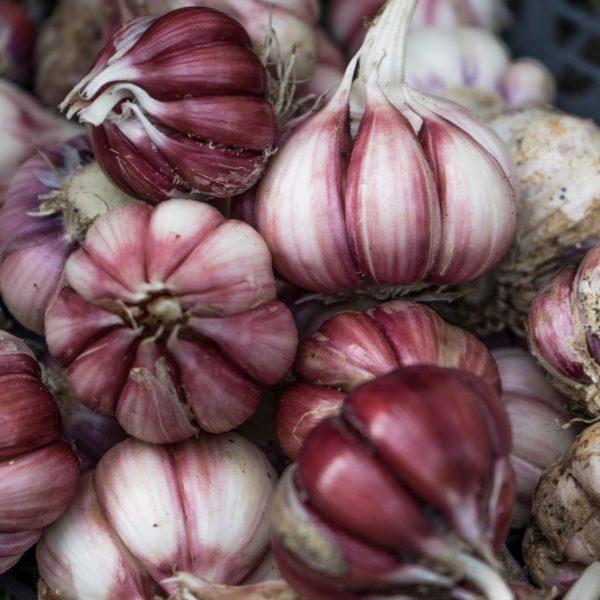 L'aglio fresco biologico de La talea