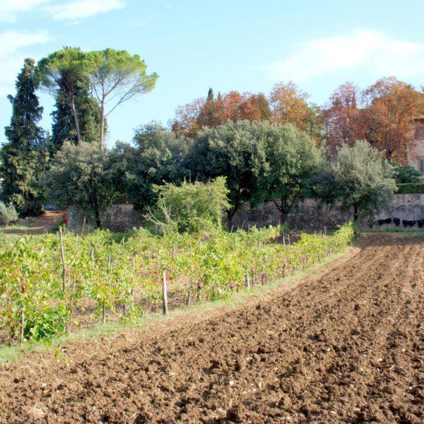 La nostra azienda agricola alle porte di Firenze