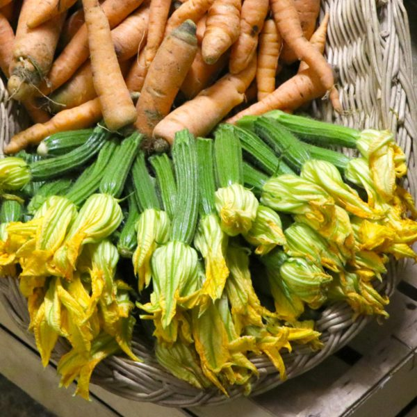 Le nostre zucchine con fiore e le carote biologiche appena raccolte