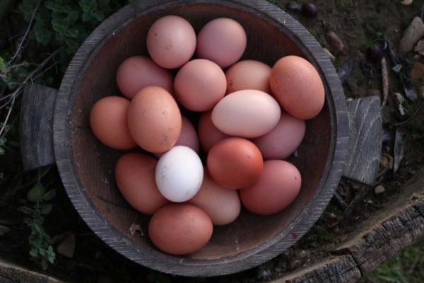 Uova fresche naturali